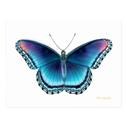 Red Spotted Purple Butterfly Postcard