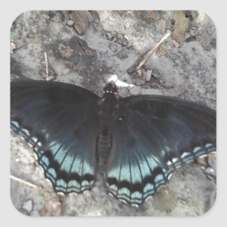 red-spotted purple butterfly square sticker