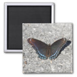 Red-spotted Purple Fridge Magnet
