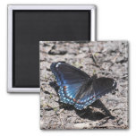 Red-spotted Purple Refrigerator Magnets