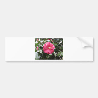 Red spotted white flower of Camellia Marmorata Bumper Sticker