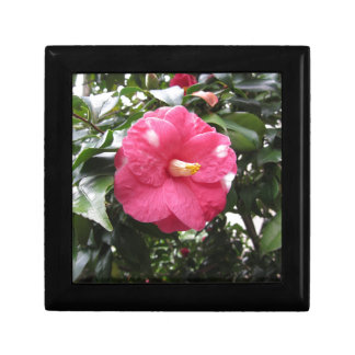 Red spotted white flower of Camellia Marmorata Jewelry Box