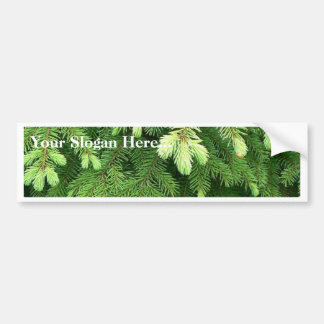 Red Spruce Sprouts 4 Bumper Stickers