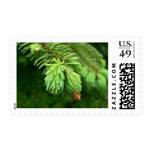 Red Spruce Sprouts Postage Stamp