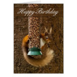Red Squirrel Birthday Card