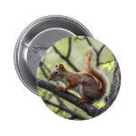 Red Squirrel Buttons