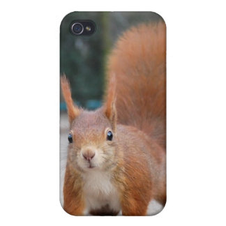 Red Squirrel Case For iPhone 4