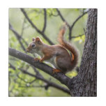 """Red Squirrel Ceramic Tile<br><div class=""""desc"""">Local Exploration is the name of my blog online (www.local-exploration.com),  which combines my love for hiking and wildlife through photography.  The photographs used on these products were taken by me from my adventures around the Mid-Hudson Valley in New York and my occasional excursions out of the state.</div>"""