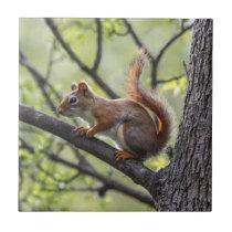 Red Squirrel Ceramic Tile
