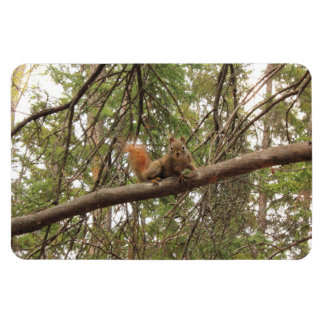 Red Squirrel Flexible Magnets