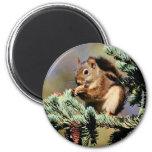 Red Squirrel Fridge Magnets