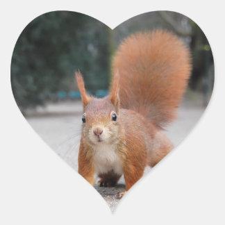 Red Squirrel Heart Sticker