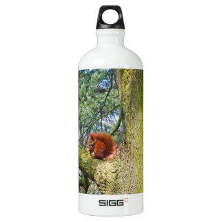 Red Squirrel in Copenhagen, Denmark Aluminum Water Bottle