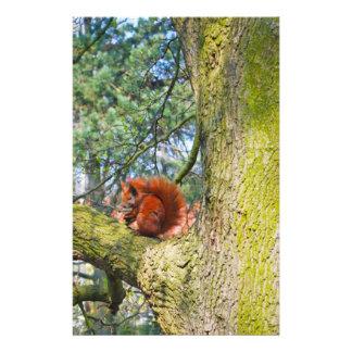 Red Squirrel in Copenhagen, Denmark Flyers
