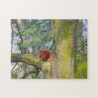 Red Squirrel in Copenhagen, Denmark Jigsaw Puzzles