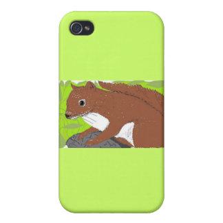 Red Squirrel iPhone 4/4S Cases