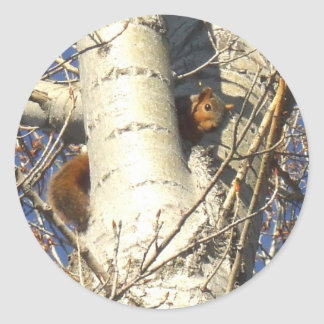 Red Squirrel large stickers
