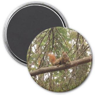 Red Squirrel Magnet