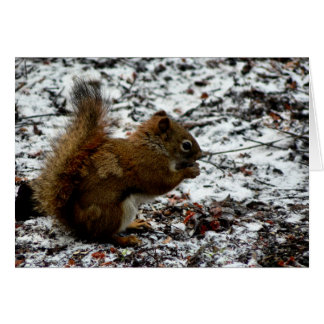 Red Squirrel Note Card