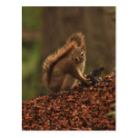 Red Squirrel on Debris Pile Postcards