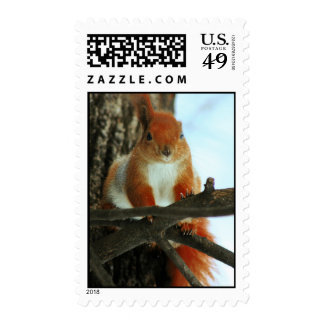 Red Squirrel On The Tree Postage Stamp