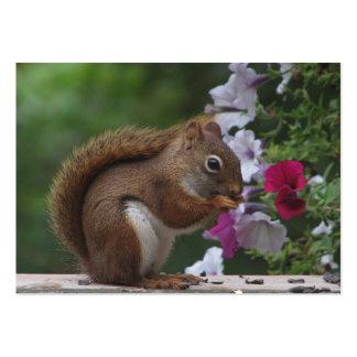 Red Squirrel & Petunias ATC Business Card Templates