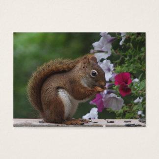 Red Squirrel & Petunias ATC Business Card