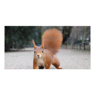 Red Squirrel Photo Card Template