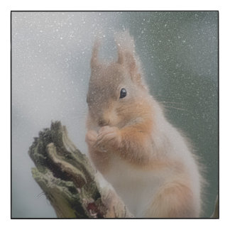 Red Squirrel picture Wood Print