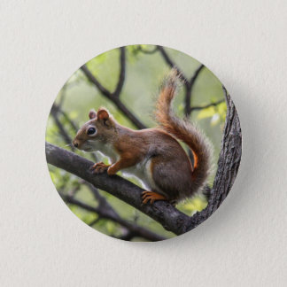 Red Squirrel Pinback Button