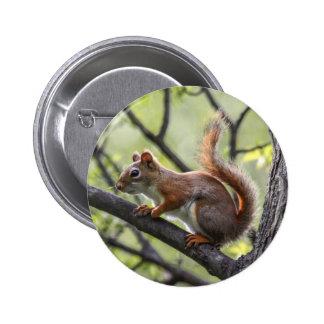 Red Squirrel Pinback Button