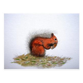 Red Squirrel pine cone Postcard