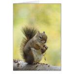 Red Squirrel, Pine Squirrel, Tamiasciurus Card