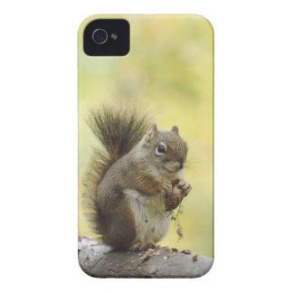 Red Squirrel, Pine Squirrel, Tamiasciurus Blackberry Cases