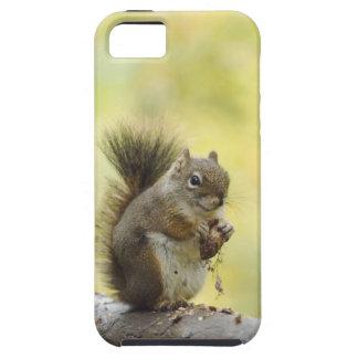 Red Squirrel, Pine Squirrel, Tamiasciurus iPhone SE/5/5s Case