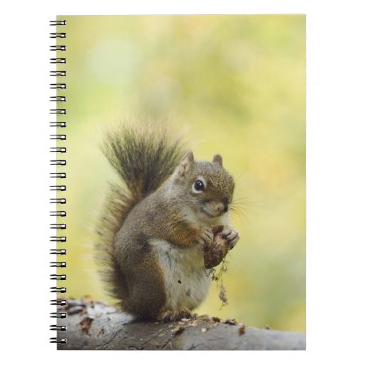 Red Squirrel, Pine Squirrel, Tamiasciurus Spiral Notebooks