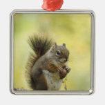 Red Squirrel, Pine Squirrel, Tamiasciurus Christmas Ornaments