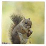 Red Squirrel, Pine Squirrel, Tamiasciurus Tiles