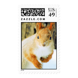 red squirrel postage stamp