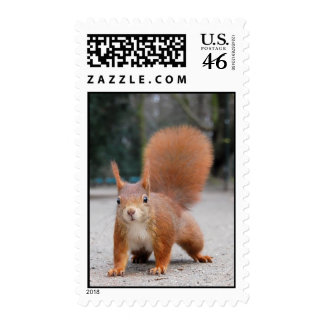 Red Squirrel Postage