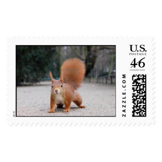 Red Squirrel Postage Stamps