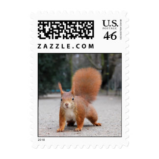Red Squirrel Stamp