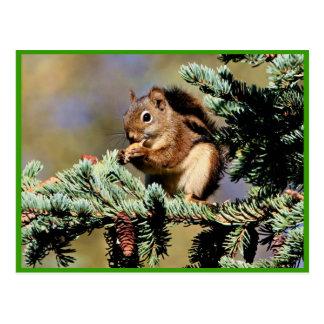 Red Squirrel Postcard