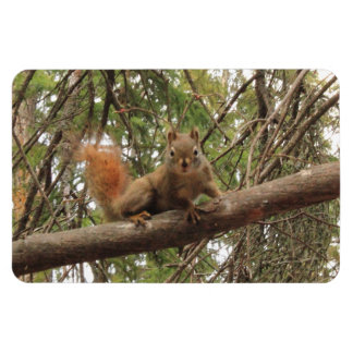 Red Squirrel Rectangle Magnets
