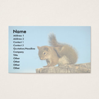 Red Squirrel scratching Business Card
