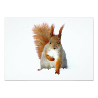 Red Squirrel sitting on snow Card