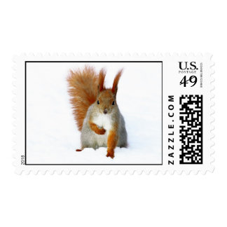 Red Squirrel sitting on snow Stamps