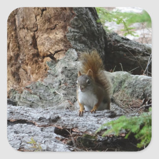 Red Squirrel Square Sticker