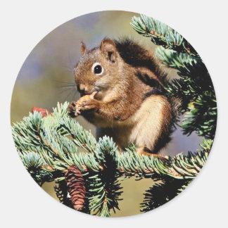 Red Squirrel Round Stickers