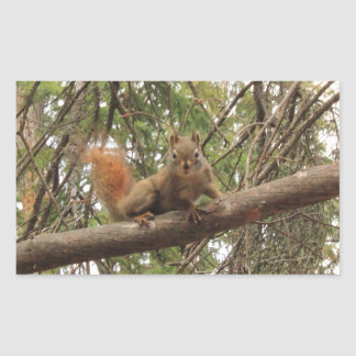 Red Squirrel Rectangular Stickers